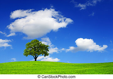 Nature and cloudy sky