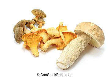 Edible mushroom isolated
