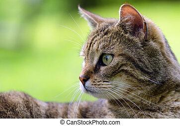 my cat - a cat portrait