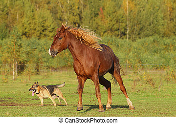 horse and dog playing