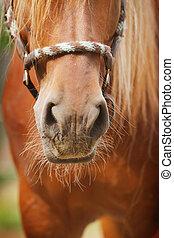 caballo, nariz
