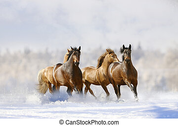 horses run - horses in winter