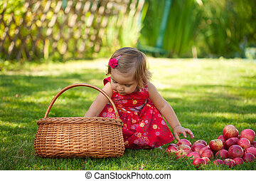 little girl collects the apples scattered on a grass in a...