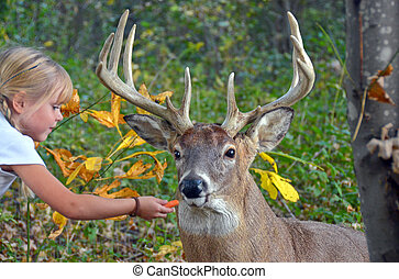 girl feeding a deer - Little girl feeding a big buck.