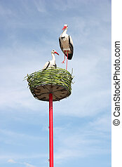 couple of white storks in nest