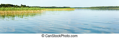 Summer rushy lake panorama - Summer rushy lake view with...