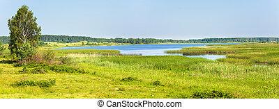 Summer rushy lake panorama - Summer rushy lake view with...