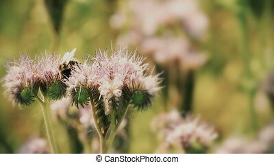 Natural scene with bumble bee - Natural scene with Purple...