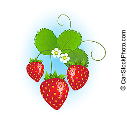 Strawberry plant with ripe strawberries and flowers on blue...