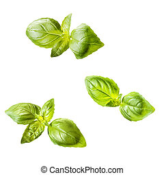 Fresh pieces of basil
