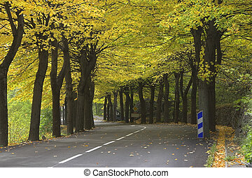 Easy leaf fall - Highway, passing between autumn trees with...