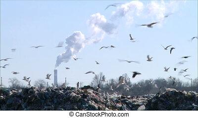 garbage dump 1 - garbage dump