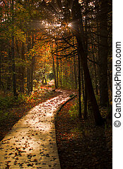 Wooden Boardwalk Cuts Through a Dark Autumn Forest - A...