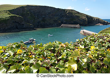 Port Isaac - Port to Port Isaac with ivy in the foreground