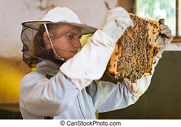 Beekeeper working in an apiary - Beekeeper in an apiary...