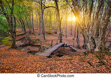 transition bridge across the river in autumn forest