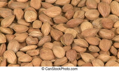 Seeds of apricot close-up - Seeds of apricot background...