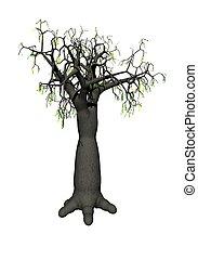 Baobab tree isolated on white background