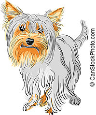 vector pedigreed dog Yorkshire terrier - closeup color...