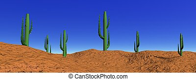Landscape cactus in desert - Several green cactus in a...