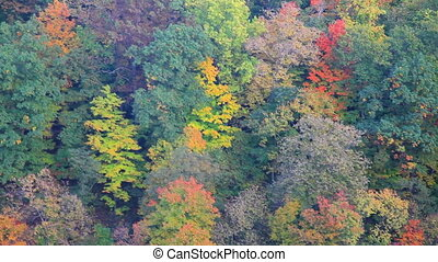 Pan over colorful forest