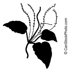 silhouette of the plantain on white