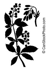 silhouette of the barberry on white