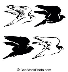 drawing of the hawk on white backgr