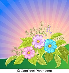 Flower background, cosmos - Flower vector background, cosmos...