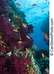 Fish fusion - The view of a colorful reef with different...