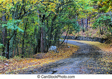 Crimean nature, mountains, forest, road,