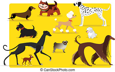 Dogs - Vector illustration of different breeds of dogs