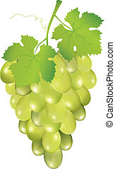 grapes - Illustration of grapes isolated on white background...