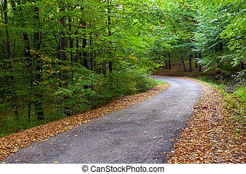 Deciduous forest in autumn, winding