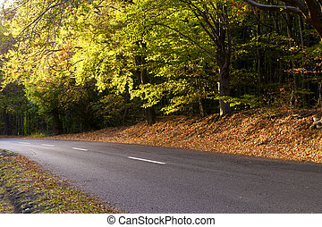 Deciduous forest in autumn, winding road - Way of the...