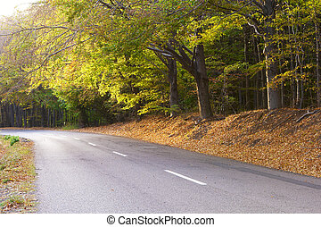 Deciduous forest in autumn, winding road.