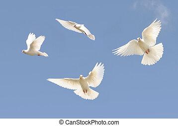 White dove in flight - Composite image of a white dove in...