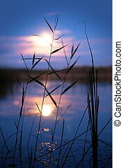 Lake in moonshine