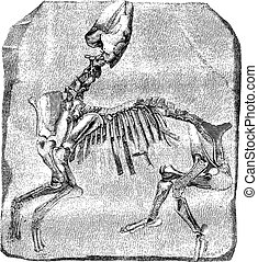 Skeleton of the great Paleotherium de Vitry, vintage...