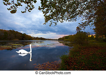 SUNSET LAKE SWAN - SUNSET LAKEVIEW SWAN