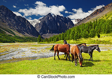 Mountain landscape with grazing horses