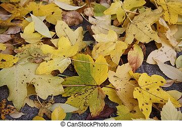 Leaves - Beautiful colorful fall foliage in autumn