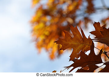 Beautiful colorful autumn leaves