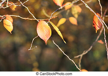 Pair of leaves in autumn