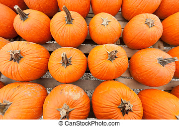 Pumpkins at the farmer market. - Colorful pumpkins at the...