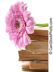 Stack of old books with pink mum flower over white