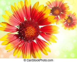 Colourful Gerbera daisies on a sparkly background