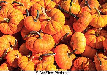 pumpkin sale - pumpkin arrangement for sale