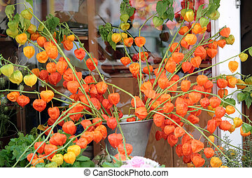 Physalis. Winter cherry