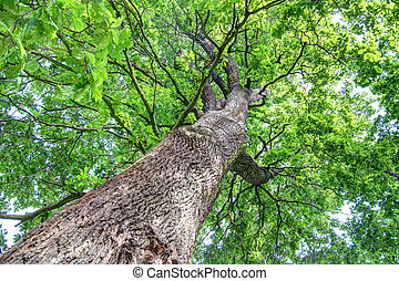 Tree top view along the trunk with rich green leaves